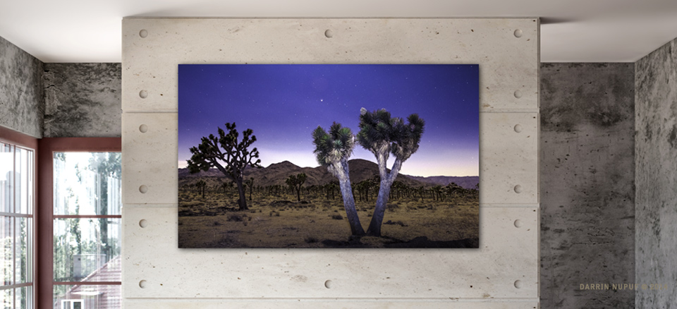 Joshua Tree Nights