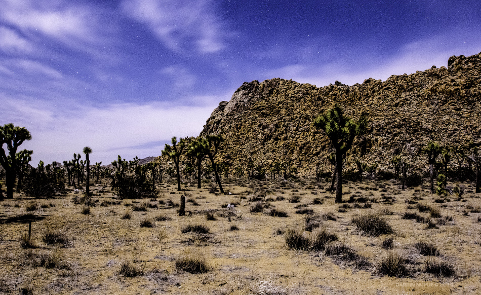 Surreal Joshua Tree Landscape
