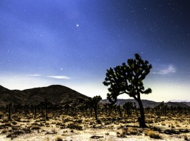 Joshua Tree At Night Surreal